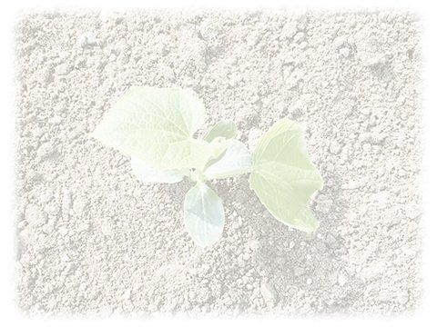 葉っぱ 自然