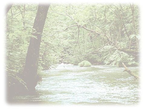 自然 川 森林